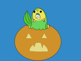 Budgie in a pumpkin! by funkyrooster