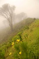 Misty Table Mountain by hotnotvissie