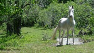 White Horse by PixiePoxPhotography