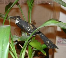 grackle in Bamboo by pandaraoke