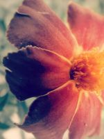 orange flower? by AuroraLeeSomething