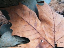 Brown Leaf by sophierevell
