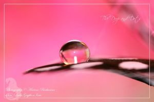 The Drop and Dots by Gryphonia