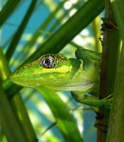 Cuban Knight Anole by flowerhippie22