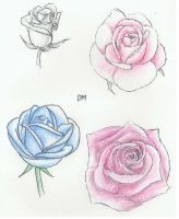 Roses by Disharmony100