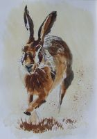 Hare by meeart