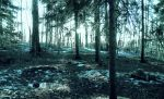 forest 38 by Amalus
