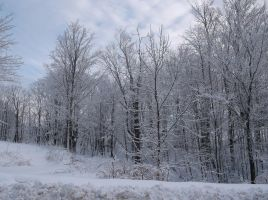 Snow Covered Trees 14 by TheGreatWiseAss