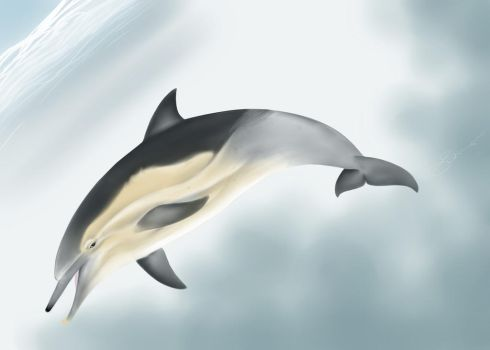 Long-beaked Common Dolphin First Attempt by Hysazu