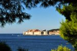 Dubrovnik through Aleppo pines 1 by wildplaces