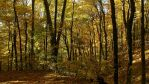 Shades of Gold by Ken-Griffith