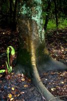 The Rain Soaked Tree Trunk by Bluegalleon