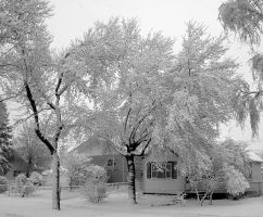 Spring Snow by schon