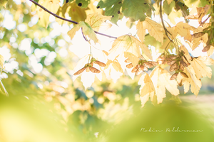 Treasures of autumn by Pamba