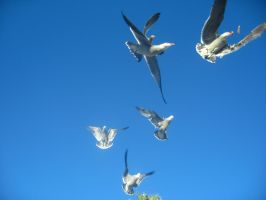 seagull picture 2... by izzy-the-hedgehog