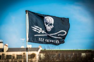 Sea Sheperd flag by Anantaphoto