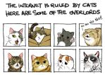 The Internet is ruled by cats... by TixieLix