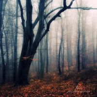Sleepy Hollow by markborbely