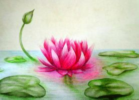 Lotus by AMEYATELANG