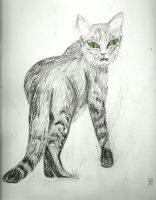 Cat by ashkara2001