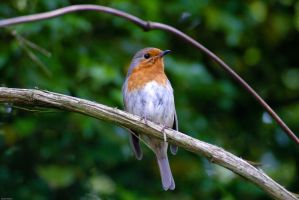 A Robin... by sk8-element