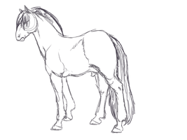 Fjord Horse sketch by Sarahostervig