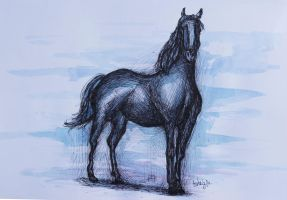 The black horse by BeaMaia