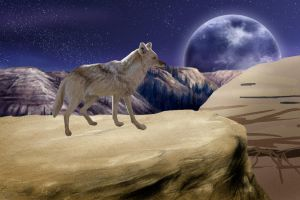 The Lone Coyote WIP2 by jocarra