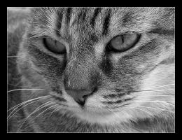 Thoughtful cat by mordoc