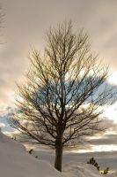 Winter tree by firegold