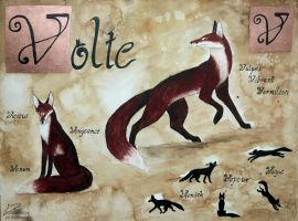 Volte by Woodswallow