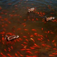 Find the Fish by Coffea