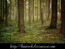 forest stock by Liisistock