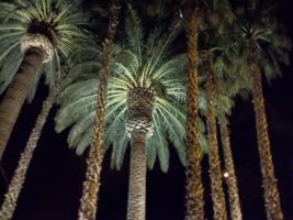 Palm Trees by DiversityDanceQueen