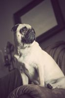 Watch Pug by garnettrules21