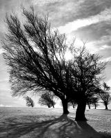 trees on schauinsland by felixw