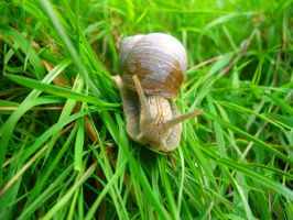 Snail after rain by ElissaDelissa