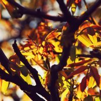 .:Colour My Life:. by BlueColoursOfNature
