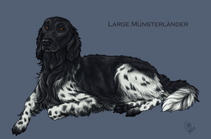 Large Munsterlander by chenneoue