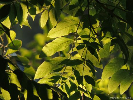 Light and Shadow by MaRyS90