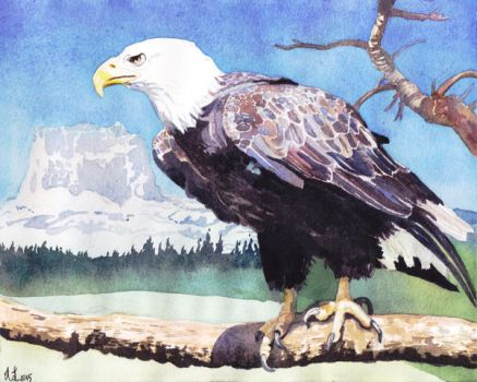Eagle Overlooking Chief Mountain by kgemeni