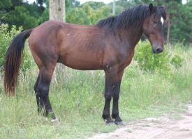 feral horse5 by whenirunSTOCK