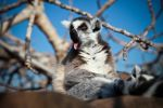 SILLY lemur by Anestis9985