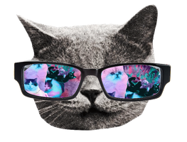 Hipster cat GIF by SirCassie