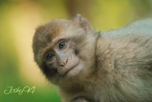 Baby Monkey by Joshy94