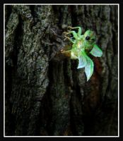 Cicada Emergence by Captain-Planet