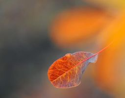 Autumn Leaf by LinuxEvolution