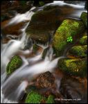 Green Moss and White Water by TRBPhotographyLLC
