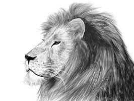 Lion sketch by Sophalone