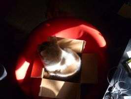Winston In a small Box 2 by BlackFlameVampire